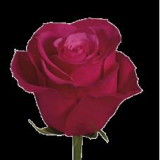 Роза CherryO