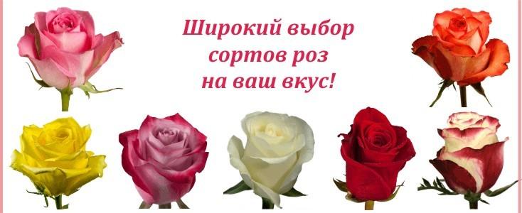 Импортные розы по сортам